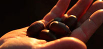 Montanera, acorns and Cinco Jotas: a match made in heaven