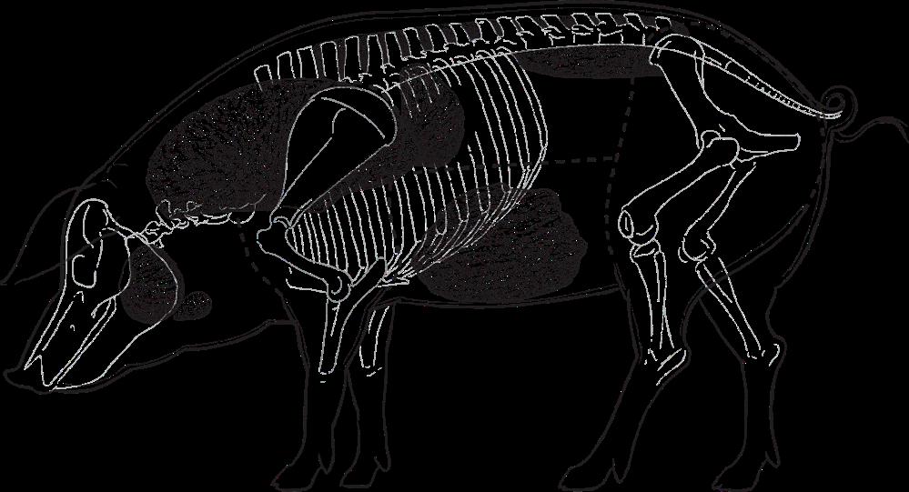 Cerdo lateral