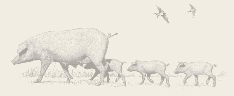 Cerdos criados en la Dehesa Cinco Jotas
